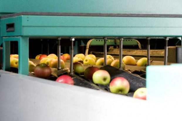 Skala sezonowego wzrostu cen jabłek będzie ograniczona