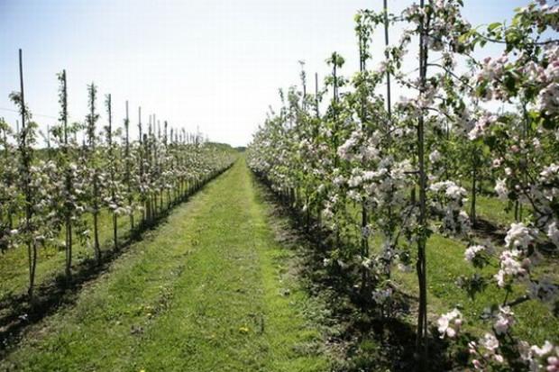 Szanse dla rozwoju ekologicznej produkcji owoców w Polsce