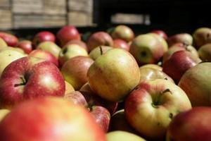 Mniejsze zapasy jabłek i gruszek w Unii Europejskiej