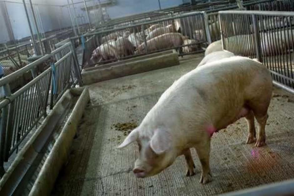Animex: Nie odczuwamy oznak kryzysu w branży mięsnej