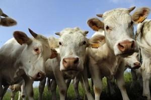 Polska za unijne pieniądze chce unowocześnić sektor mleczarski