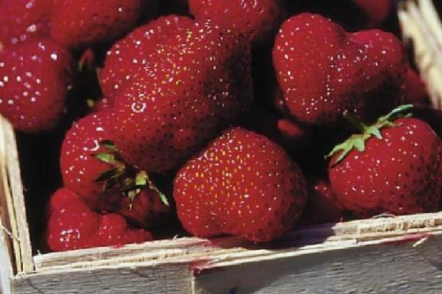 Grupa robocza ma wypracować zasady skupu owoców miękkich