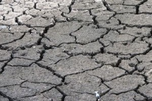 Maleją szanse na polisy suszowe z dopłatą państwa
