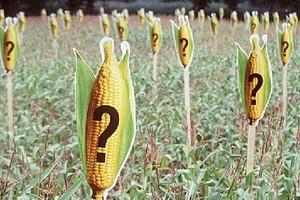 Głodówka przeciwko produktom GMO