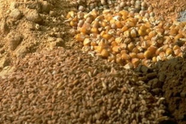 Spadają ceny zbóż na krajowym rynku