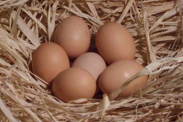 Drogie euro podnosi ceny polskich jajek