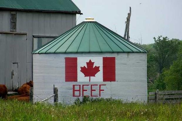 Wzrośnie eksport wołowiny oraz mięsa cielęcego z Kanady