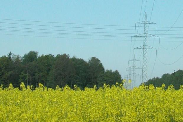 Bruksela nie będzie już wspierać upraw rzepaku na cele energetyczne
