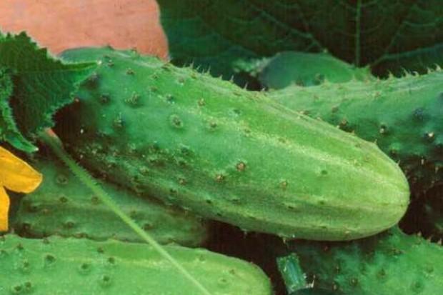Unia upraszcza politykę rolną, m.in. już nie będzie sprawdzać krzywizny ogórka