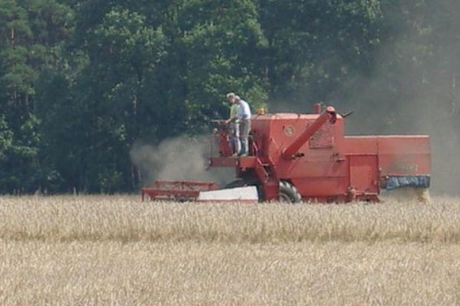 W tym roku zbiory zbóż w Polsce zmaleją do 27 mln ton