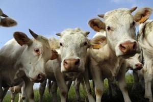 Kilka państw przekroczy kwotę mleczną