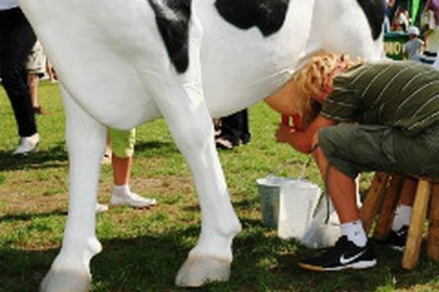 Rolnicy nerwowo reagują na kryzys w mleczarstwie