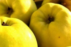 Rekordowy spadek eksportu chińskiego koncentratu jabłkowego