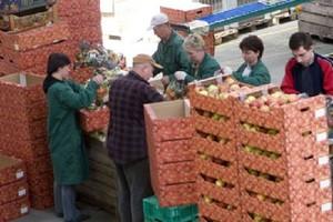 Polskie owoce, a przede wszystkim jabłka bardzo konkurencyjne cenowo