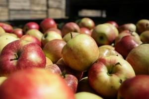 Jest szansa na uregulowanie relacji między producentami, a przetwórcami jabłek?