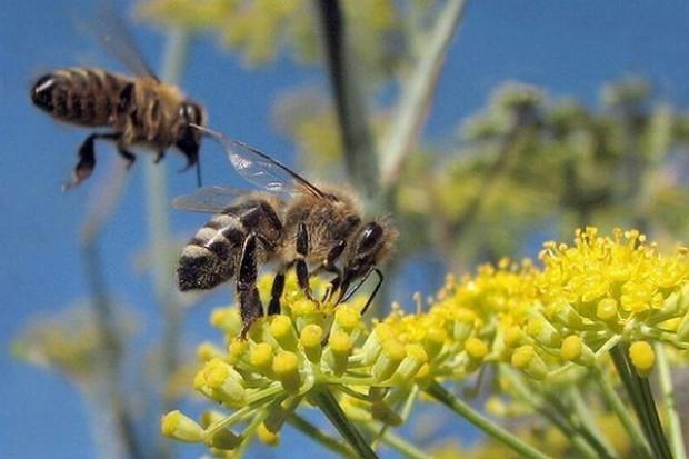 Japończycy importują od nas miody i... pszczoły
