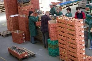 Eksport polskich produktów rolno-spożywczych cały czas rośnie