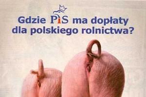 Prezes PiS: PO obraża polską wieś. To sprowadzanie kampanii do poziomu chlewu