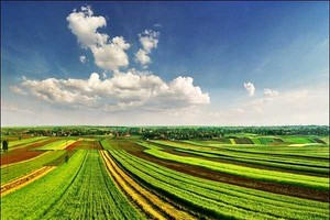 IERiGŻ: Zbiory zbóż będą o 5 proc. niższe niż w zeszłym roku