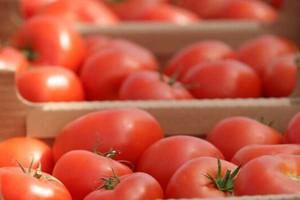 Rosną ceny pomidorów BBB na eksport