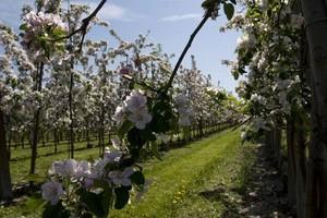 O 28 proc. wzrosła w 2008 r. liczba producentów ekologicznych