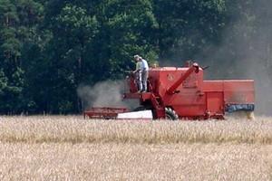 Będą dobre zbiory, ceny zbóż spadają