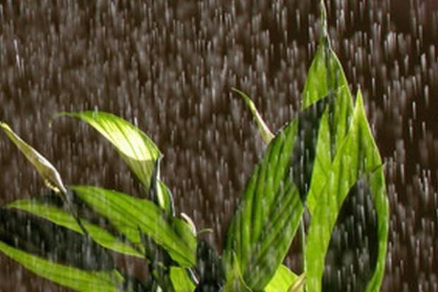 Nie każdy ubezpieczony rolnik otrzyma odszkodowanie za zatopione uprawy