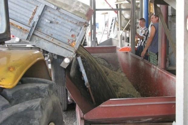 Producenci rzepaku: Zbiory ziarna wyższe od szacowanych