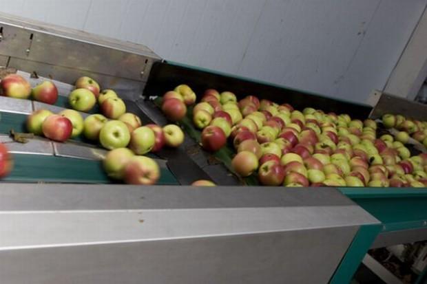 Spada unijna produkcja jabłek