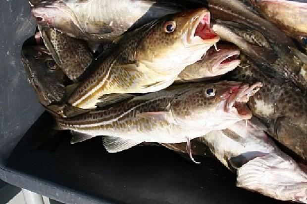 KE proponuje podwyższenie kwot połowowych dorsza na Bałtyku