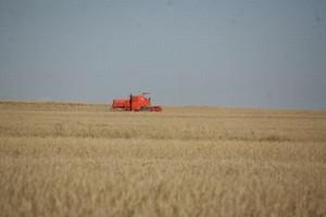 Ukraińskie Ministerstwo Rolnictwa: Tegoroczne zbiory zbóż wyniosą 45 mln ton