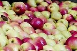 Prezes Sokpol Koncentraty: Sytuacja na światowym rynku koncentratu jabłkowego jest bardzo zła
