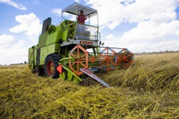 Prezes KFPZ: Ceny zbóż raczej w tym roku już nie wzrosną