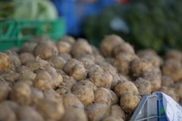 Zbiory ziemniaków w Polsce będą w tym roku niższe