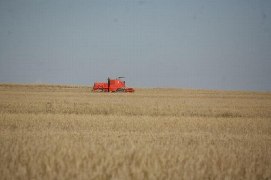 USDA podwyższa światowe prognozy zbiorów zbóż