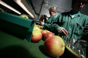 """Narastają problemy z programem """"owoce w szkole"""". Nie ma dostawców chętnych do współpracy"""