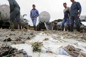 Czescy rolnicy wylewają mleko na pola