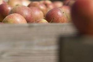 Prezes Kampol Fruit: Rząd powinien pomyśleć o skupie interwencyjnym warzyw i owoców