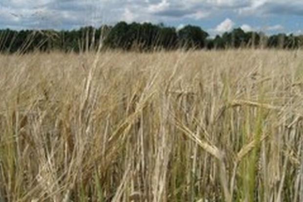 IERiGŻ: Dzięki WPR polskie rolnictwo może być bardziej konkurencyjne globalnie