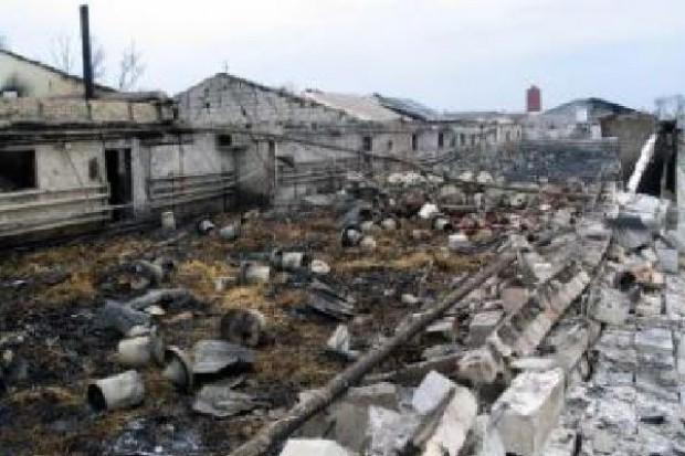 Potężny pożar fermy drobiu na Śląsku. Spaliło się 20 tys. kurcząt