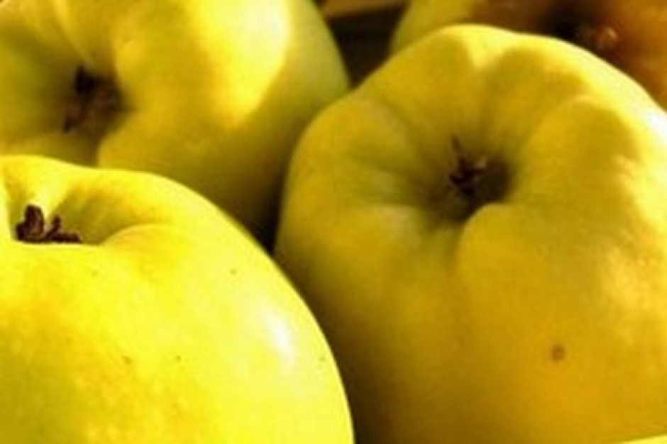 Niskie ceny skupu jabłka w zakładach przetwórczych