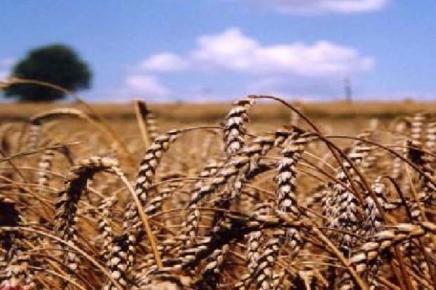 Najnowsze podniesione prognozy zbiorów zbóż zatrzęsły giełdą w USA