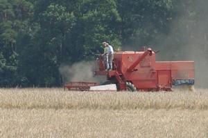 Prognozy spadku cen zbóż spowodowały gwałtowne obniżki notowań przenicy