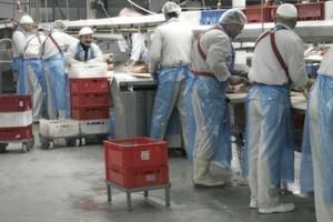 Aż o 50 proc. zwiększy się liczba upadłości w branży mięsnej
