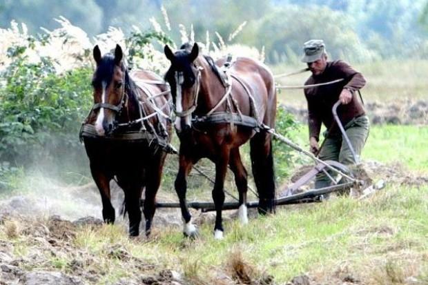 90 proc. polskich gospodarstw nie rozwija się