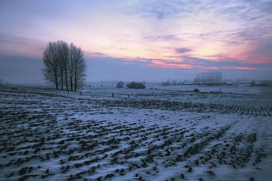 Mrozy nie wpłynął na zbiory zbóż na Ukrainie