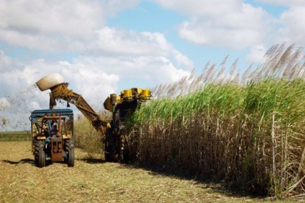 Na Wyspach, podobnie jak w Polsce, nie wykorzystują potencjału produkcji biomasy