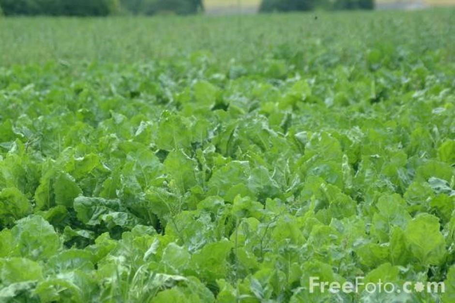 Coraz więcej producentów żywności stawia na ekologię