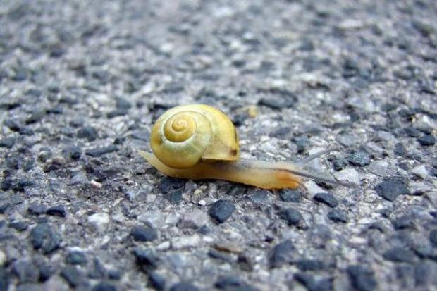 W UE ślimak to ryba