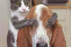 Co 12 minut wybucha sąsiedzka awantura o psa lub kota
